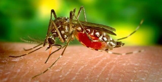 Insektfælder: Myg, bananfluer, hvepse og bier