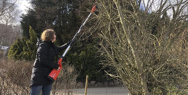 Forårsklargøring af haven – med en Husqvarna stangsav
